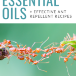 How to Fight an Ant Invasion with Essential Oils Pinterest Pin